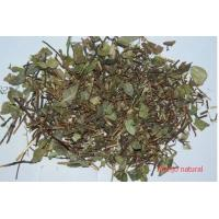 Buy cheap Trachelospermum jasminoides(Lindl.) Lem.whole plants,Luo Shi,Chinese herb product