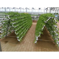 Buy cheap 12m Single Span Greenhouses product