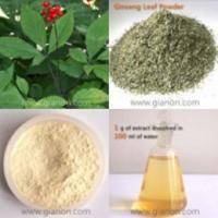 Quality 100% Natural Ginsenosides for sale