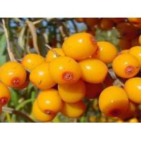 Buy cheap Seabuckthorn seed oil product