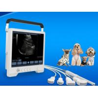 Buy cheap Instrument ultrasonique de diagnostic pour l'onde ultrasonique dans l'hôpital de clinique d'animal familier du veterina product