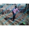 Buy cheap sembradora caliente del maíz de la venta from wholesalers