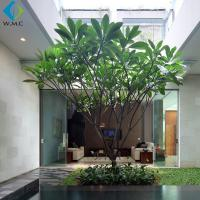 Buy cheap 3.5m Artificial Plumeria Tree Without Flower , Customized Fake Green Trees product