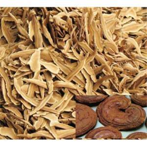 Mushroom Extract & Mushroom Mycelium powder