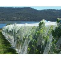 Buy cheap Anti-hail HDPE Agricultural Netting product