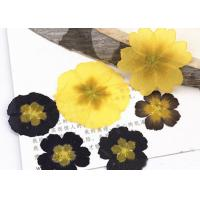 Buy cheap Aroma Candle Decoration Primula Real Pressed Flowers Resin Phone Case product