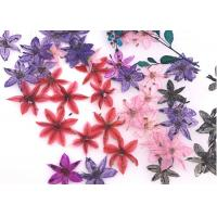 Buy cheap Time Gems Decorations DIY Pressed Flowers / Hand Pressed Flowers Multicolor product