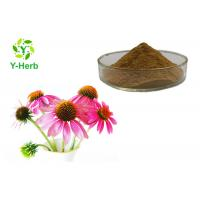 China Organic Polyphenol/Chicoric Acid/Echinacoside Echinacea Purpurea Extract Powder on sale