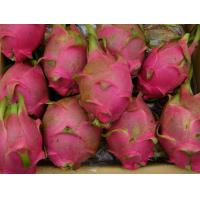 Buy cheap Fruit Series dragon fruit from wholesalers