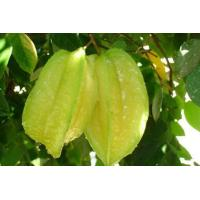Buy cheap Fruit Series starfruit from wholesalers