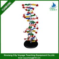 Buy cheap DNA Structure model product