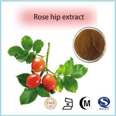 Tonking Manufacturer Supply Vitamin C Rosehip Extract Rose