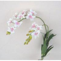 Buy cheap orchids stems DN7267 from wholesalers