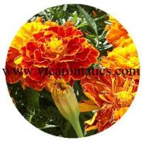 Buy cheap Floral product