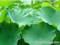 Buy cheap Herbal Extract (Plant Extract) product