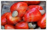 Buy cheap Cashewnut from wholesalers