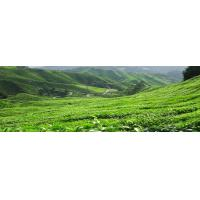Buy cheap Vietnamese Tea from wholesalers