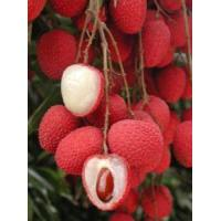Buy cheap Lychee Tree Brewster Variety Air-Layered product