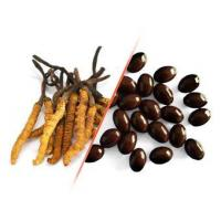 Buy cheap Cordyceps Sinensis Tablet product