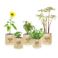 Eco-Friendly Paper Flower Bag for Germination & Growth of P